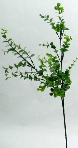 单枝富贵树69叶              $80元              单枝水果叶图片